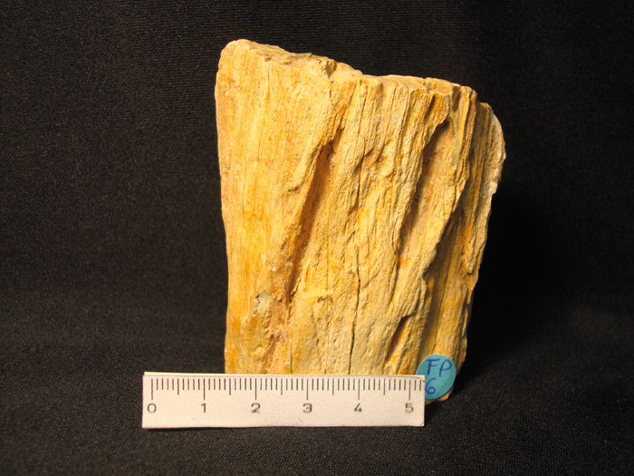 Tronco de Madera fósil-Xilopalo