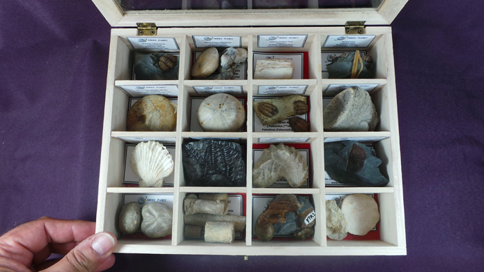 fossils world collection