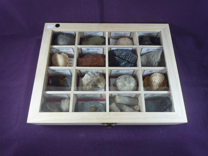 Colección fósiles del mundo,16 fósiles diferentes y treinta y una piezas