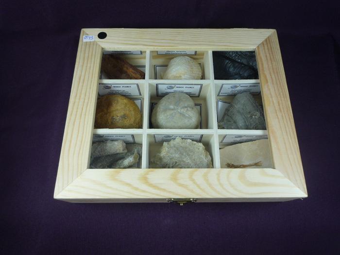 Colección fósiles del mundo,9 fósiles diferentes y diez y siete piezas
