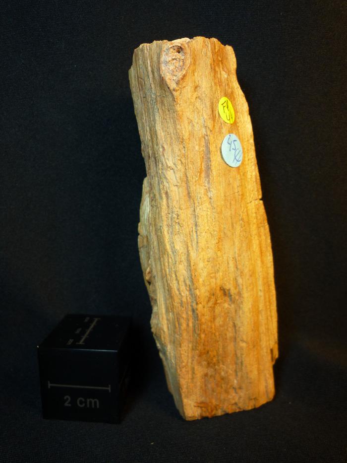 Tronco madera fósil
