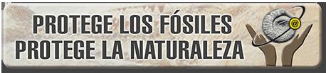 protege-fosiles