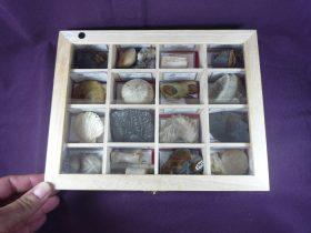 colección fósiles del mundo