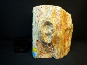 Tronco madera fósil, xilópalo